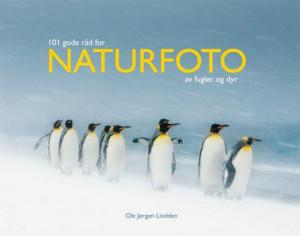 101 gode råd for naturfoto av fugler og dyr